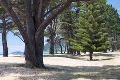 Spacerowicz w drzewach Fotografia Stock