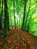 spacery lasu. Obrazy Stock