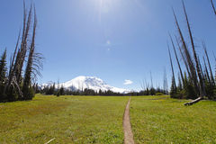 spacery toru Mt Rainer, Waszyngton Obrazy Stock
