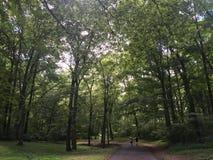 spacery w parku Fotografia Stock