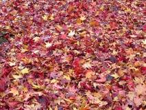 Spacial осень в colores Стоковая Фотография RF