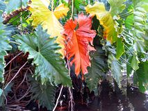Spacial Herbst in den colores Stockbild