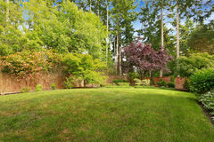Spacious backyard with fence. Royalty Free Stock Image