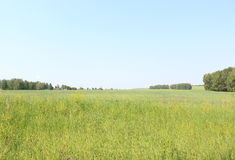 Spacious field stretching into the distance Royalty Free Stock Image