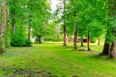 Spacious front yard landscape with lawn and trees Stock Photo