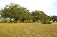 Spacious Grassy Field with Trees on the Edge Stock Images