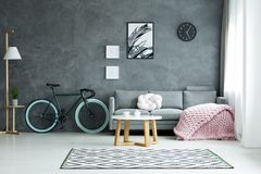 Spacious living room with bicycle. Lamp and bicycle near grey couch with pink blanket in spacious living room interior with poster on dark wall Royalty Free Stock Image