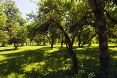 Spacious park with trees in the sunshine lush grass Stock Images