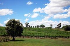 Spacious vineyard. Large vineyard during the day Stock Images