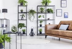 Spacious white living room with urban jungle on black metal shelf and whit brown leather couch royalty free stock photos