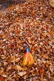 Spadać barwiony suszy liście w ogródzie i miotłę w rozsypisku Fotografia Royalty Free