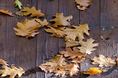 Spadać dębów liście na drewnianym dachu Zdjęcie Royalty Free