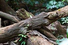 Spadać drzewa w lesie obraz stock