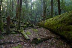 Mt Śródpolny park narodowy przy świtem Fotografia Stock