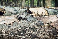 Spadać drzewny bagażnik przerastający z pieczarkami obraz stock