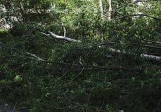Spadać drzewny lying on the beach na zielonej trawie w lesie zdjęcie stock