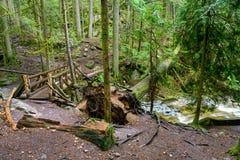 Spadać drzewo i stary drewniany most nad Cyprysowym zatoczka bieg przez szorstkiego terenu w ciemnym tropikalnym lesie deszczowym zdjęcia stock
