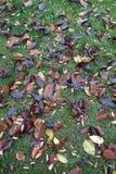 Spadać drzewo liście Obraz Stock