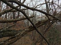Spadać gałąź i drzewa las jesieni Obraz Stock