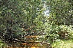 SPADAĆ gałąź NAD strumieniem W lesie Zdjęcie Royalty Free
