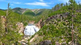 spadać gibon Yellowstone zdjęcie wideo