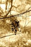 Spadać kępa nieżywi liście wiesza w dół zdjęcie stock