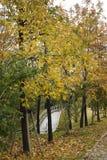 spadać liść ścieżki drzewa Zdjęcie Royalty Free