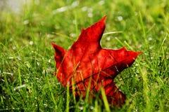 Spadać liść klonowy w jesieni zdjęcia stock