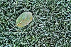 Spadać liść na trawie zdjęcie royalty free