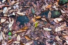 Spadać liść upaćkana tekstura Zdjęcie Stock