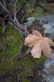 Spadać liść zakrywający podeszczowymi kroplami Zdjęcie Royalty Free