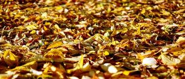 Spadać liścia spadek 2 Zdjęcia Stock