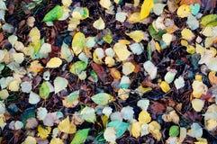 Spadać liścia spadek Obrazy Royalty Free