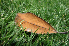 Spadać liście Zdjęcie Royalty Free