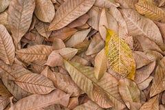 Spadać liście Fotografia Stock