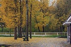 Spadać liście blisko drzew i ławki w parku Fotografia Royalty Free