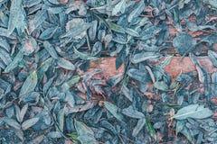 Spadać liście drzewa marznęli na drewnianym tle Zdjęcia Stock