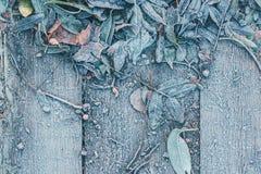 Spadać liście drzewa marznęli na drewnianym tle Fotografia Stock