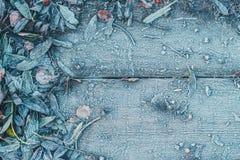 Spadać liście drzewa marznęli na drewnianym tle Zdjęcie Stock