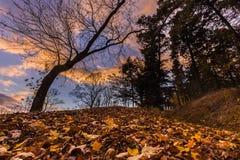 Spadać liście i drzewna sylwetka przy zmierzchem zdjęcia stock