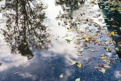 Spadać liście i podeszczowa kałuża na miastowej drodze zdjęcia royalty free
