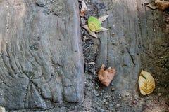 Spadać liście na drewnianym tekstury tle Fotografia Royalty Free