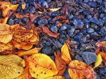 Spadać liście na kamieniach zdjęcia stock