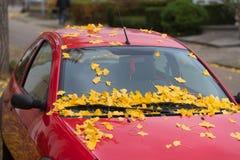 Spadać liście na samochodzie obraz stock