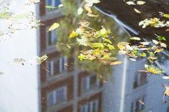 spadać liście powierzchnia kałuża na miastowej drodze fotografia royalty free
