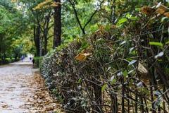 Spadać liście w ścieżce jesienny park Obraz Stock