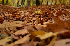 Spadać liście w jesień lesie Fotografia Royalty Free
