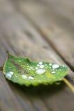 Spadać mokry liść z kroplami obrazy royalty free