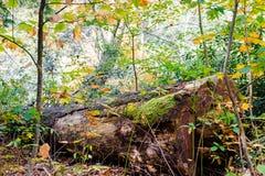 Spadać nazwa użytkownika las obrazy stock