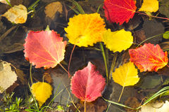 Spadać od drzew wewnątrz liście na powierzchni woda Fotografia Stock